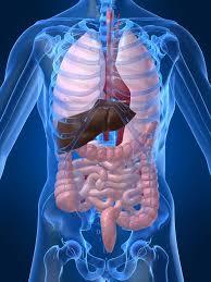 bruler-les-graisses-et-eliminer-les-toxines-du-corps